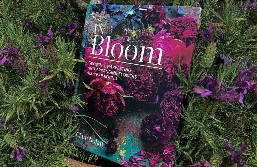In Bloom – Clare Nolan