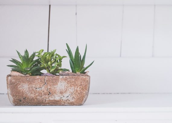 Styling your Home with House Plants - Beautiful Heirloom Home