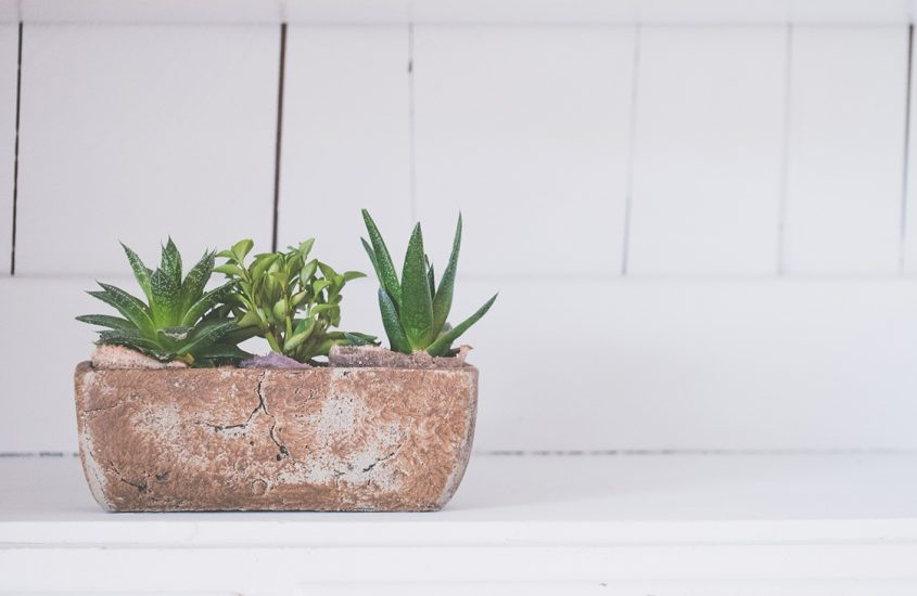 Styling your Home with House Plants