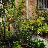 Grow Fruit & Vegetables in Pots An online lecture given by Aaron Bertelsen